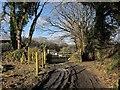 SX4272 : Track, gate and path, Dimson by Derek Harper