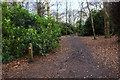 SJ4188 : Path through rhododendrons in Childwall Woods by Bill Boaden