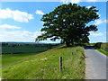 SO8053 : Otherton Lane by Mat Fascione