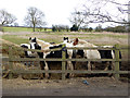 NZ2421 : Horses and hay by Walworth Road, Heighington by Oliver Dixon