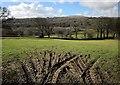 SX3072 : Field by Beneathwood by Derek Harper