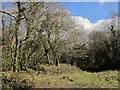 SX3071 : Caradon Wood by Derek Harper