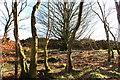 NX4958 : Ballochanamour Wood by Billy McCrorie