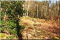 NX4959 : The Oak Trail, Balloch Wood by Billy McCrorie