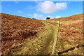 NX6081 : Southern Upland Way on Waterside Hill by Billy McCrorie