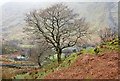 SH6058 : Trees on slope at Nant Peris by Trevor Littlewood