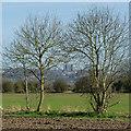 SO8890 : Farmland  east of Himley, Staffordshire by Roger  Kidd
