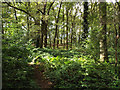 SP1482 : Hobs Moat, Olton – the central wooded area by Robin Stott