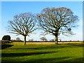 SP8010 : Farmland, Bishopstone by Andrew Smith