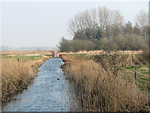 TG3504 : Drainage ditch in the Langley Marshes by Evelyn Simak