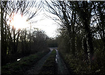 TM3071 : Gin Lane, Laxfield by Adrian Cable