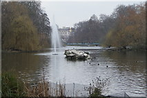 TQ2979 : View of the pelicans on the island in St. James's Park Lake by Robert Lamb