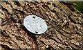 J3470 : Tree number disc, Lagan towpath, Belfast (March 2015) by Albert Bridge