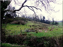 H6059 : Rushy ground, Green Hill Demesne by Kenneth  Allen