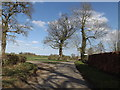 TM2080 : Grove Road, Brockdish by Geographer
