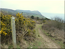 SY3893 : Southwest Coast Path towards Golden Cap by Gary Rogers