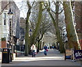 SK5804 : Trees along the New Walk in Leicester by Mat Fascione