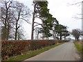 NY5833 : Road past Hopehill Wood by Oliver Dixon