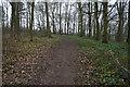 SE8149 : Path in Pocklington Wood by Ian S