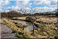 SZ7799 : Wetland by Ian Capper