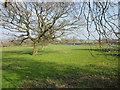 SJ4746 : Footpath at Oldcastle Heath by Jeff Buck