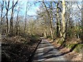 TQ0797 : Spring in Whippendell Wood by Bikeboy