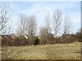 NZ2342 : Field north of Deerness Valley Walk by Trevor Littlewood