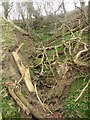 NT9047 : Dead branches in Straw Dean by Graham Robson