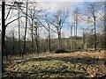 SO9814 : Pinswell Plantation by Derek Harper