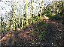 SE0722 : Path junction in North Dean Wood by Humphrey Bolton