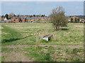 SU8346 : Bishop's Meadow, Farnham by Alan Hunt