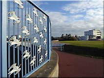 SD4264 : A flock of sea birds (Oystercatchers?) on the fence at Morecambe by Steve  Fareham