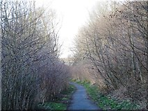 NZ2462 : Path in Gateshead Riverside Park by Mike Quinn