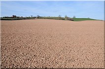 SO6731 : Arable land near Stonehouse Farm by Philip Halling