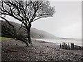 SS8747 : Oak by Porlock Beach by Derek Harper