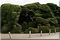 TL5238 : Topiary at Audley End House by Peter Trimming