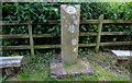 SO8581 : Staffordshire & Worcestershire boundary marker by Mat Fascione