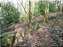 SE0722 : The eastern end of the path through the western part of North Dean Wood by Humphrey Bolton