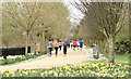 J3675 : Daffodils and runners, Victoria Park, Belfast (April 2015) by Albert Bridge