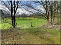 SD6527 : Witton Country Park by David Dixon