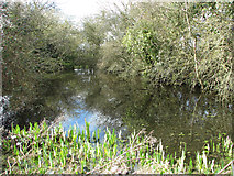 TG2103 : The pond beside Pond Cottage by Evelyn Simak