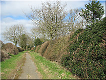 TG2103 : Hedgerows beside Mangreen by Evelyn Simak