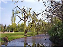 TF0920 : A trim for the weeping willows at Bourne, Lincolnshire by Rex Needle