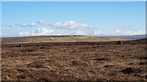 NY7735 : Heather moorland south of Slack's Rigg by Trevor Littlewood