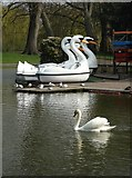 TL9925 : Boating lake, Castle Park, Colchester by Neil Theasby