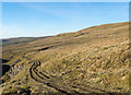 NY7737 : Rutted route in valley of Clargill Burn by Trevor Littlewood