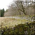 NY6393 : Field and walls by Castle Wood, Kielder by Rich Tea