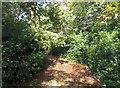 SU7955 : Path behind Ibworth Lane by Sandy B