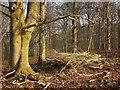 SP1311 : Larkethill Wood by Derek Harper