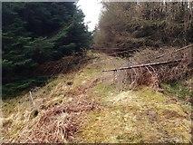 NM6331 : Old road in Glen More by Steven Brown